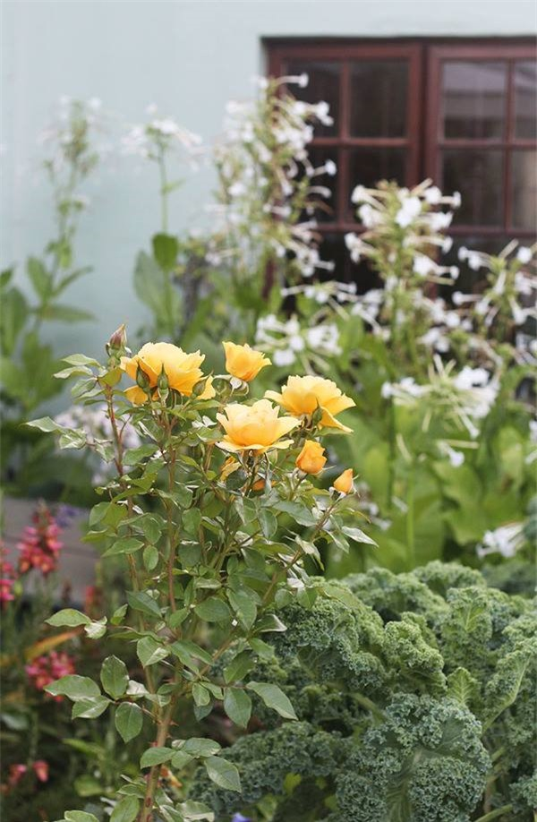 Cuộc đời bình yên bên vườn hoa trái đẹp như thiên đường của bà lão 83 tuổi - 9