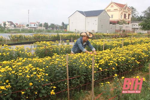 Anh Nguyễn Văn Nam chăm sóc hoa tại mô hình nông nghiệp của mình ở xã Nga Thạch (Nga Sơn).