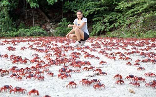Ảnh đẹp: Hàng triệu cua đỏ di cư từ rừng ra biển - 1