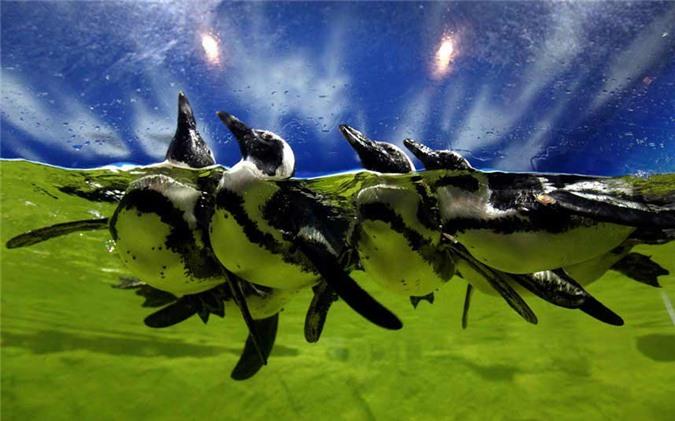 Ảnh đẹp: Hàng triệu cua đỏ di cư từ rừng ra biển - 10