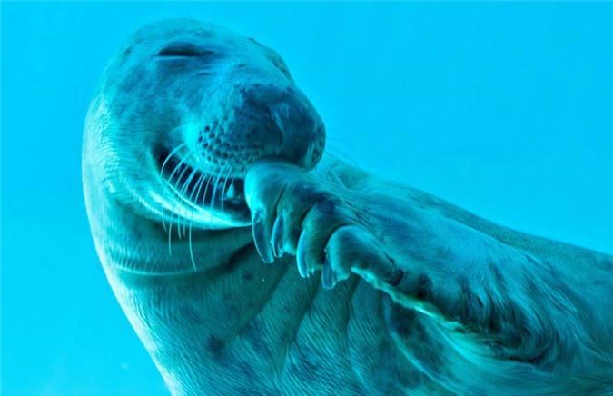 Ảnh đẹp: Hàng triệu cua đỏ di cư từ rừng ra biển - 5
