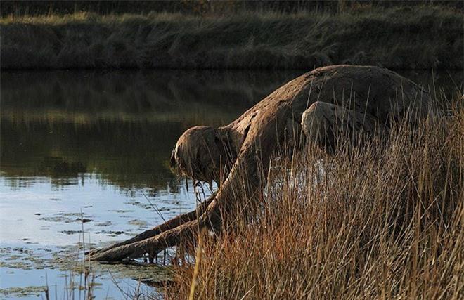 Buổi tối gặp những bức tượng đầm lầy này đảm bảo du khách hết hồn bỏ chạy - Ảnh 7.
