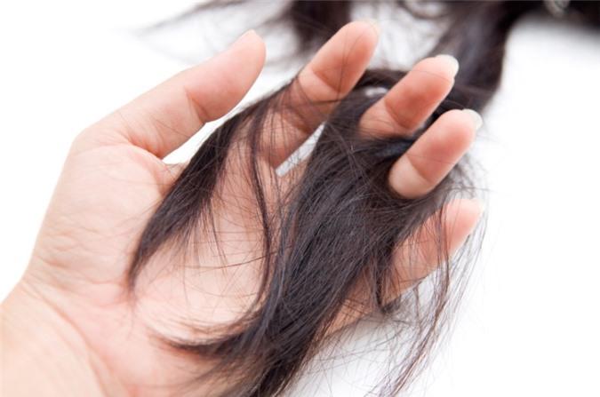 Sử dụng hà thủ ô trị rụng tóc là cách hiệu quả