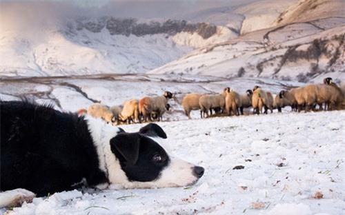 Ảnh đẹp: Gấu Bắc Cực ăn mừng sinh nhật - 5