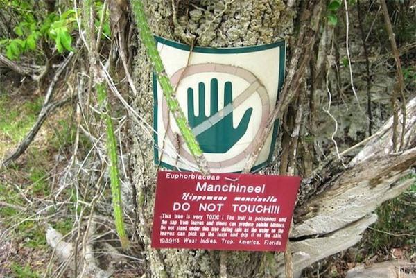 Những loại cây cảnh đẹp có độc dễ gây tử vong - 3