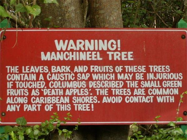 Những loại cây cảnh đẹp có độc dễ gây tử vong - 4