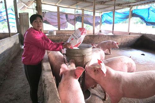 Bộ NN&PTNT dự kiến đến quý IV/2020 đảm bảo cơ bản nhu cầu lợn giống, lợn thương phẩm
