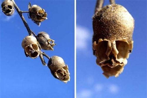 Ngỡ ngàng trước những loài hoa kỳ dị nhất thế giới - anh 1