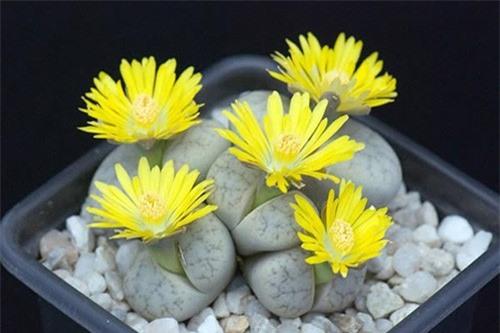 Ngỡ ngàng trước những loài hoa kỳ dị nhất thế giới - anh 10
