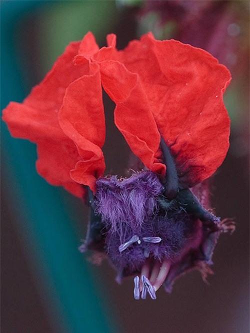 Ngỡ ngàng trước những loài hoa kỳ dị nhất thế giới - anh 4