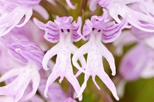 Ngỡ ngàng trước những loài hoa kỳ dị nhất thế giới - anh 5