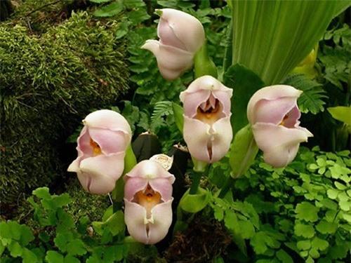 Ngỡ ngàng trước những loài hoa kỳ dị nhất thế giới - anh 9