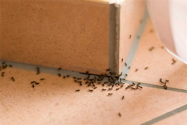 Bạn có thể đuổi cả đàn kiến ra khỏi nhà chỉ bằng những nguyên liệu đơn giản.