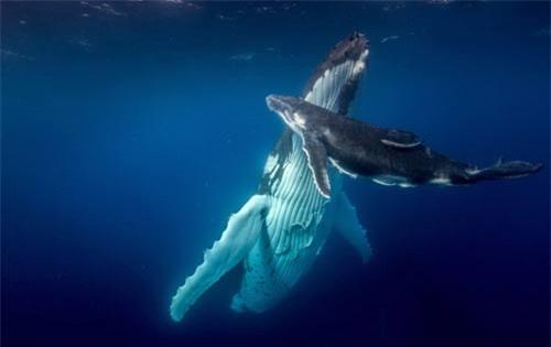 Ảnh đẹp: Dế cả gan đậu trên mũi cá sấu - 11