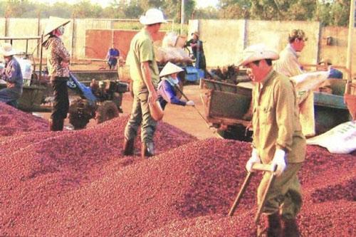 Doanh nghiệp xuất khẩu cà phê muốn tiến sâu vào thị trường châu Phi phải tìm hiểu kỹ thị hiếu người tiêu dùng và các quy định tại từng quốc gia