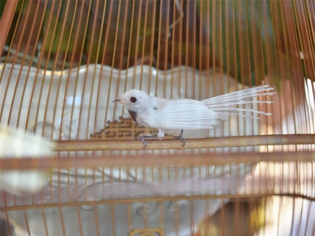Mãn nhãn với bộ sưu tập chim quý hiếm, giá khủng của vua chim màu Việt - 14