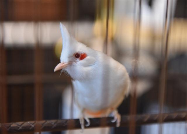 Mãn nhãn với bộ sưu tập chim quý hiếm, giá khủng của vua chim màu Việt - 2
