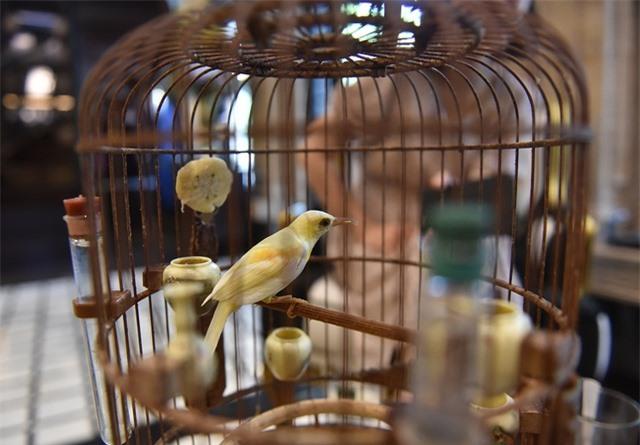 Mãn nhãn với bộ sưu tập chim quý hiếm, giá khủng của vua chim màu Việt - 5