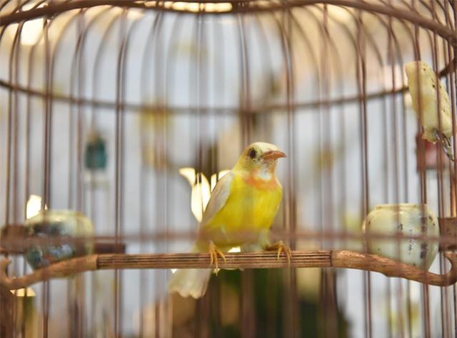 Mãn nhãn với bộ sưu tập chim quý hiếm, giá khủng của vua chim màu Việt - 8