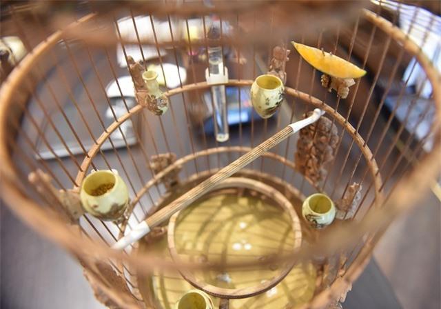 Mãn nhãn với bộ sưu tập chim quý hiếm, giá khủng của vua chim màu Việt - 9