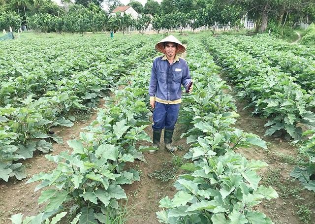 Mô hình trồng rau của anh Nguyễn Quốc Oai (Ảnh: TL)