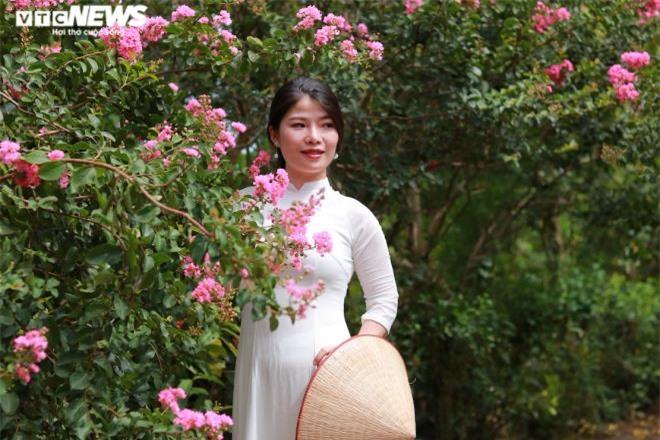 Ảnh: Con đường rực rỡ hoa tường vi như vườn cổ tích ở Hà Nội - 10