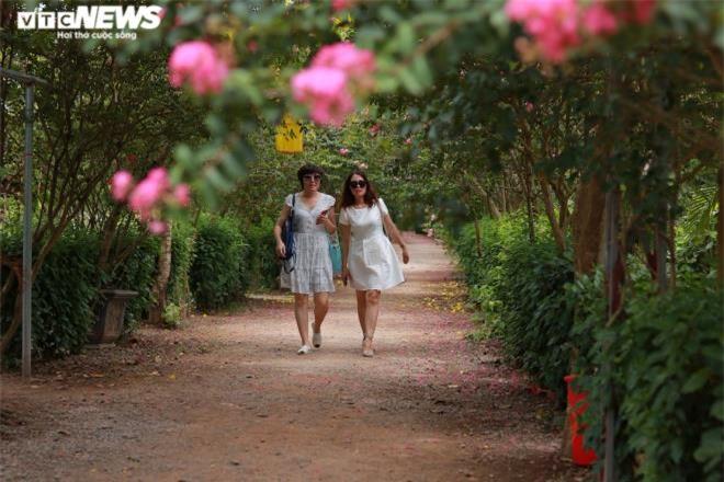 Ảnh: Con đường rực rỡ hoa tường vi như vườn cổ tích ở Hà Nội - 12