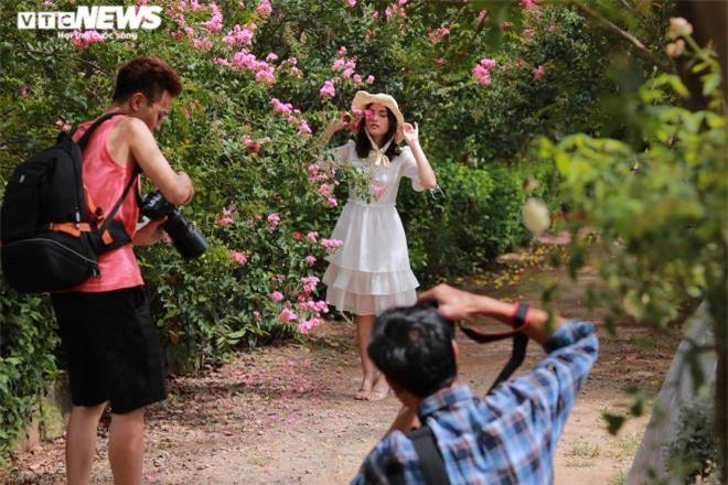Ảnh: Con đường rực rỡ hoa tường vi như vườn cổ tích ở Hà Nội - 2