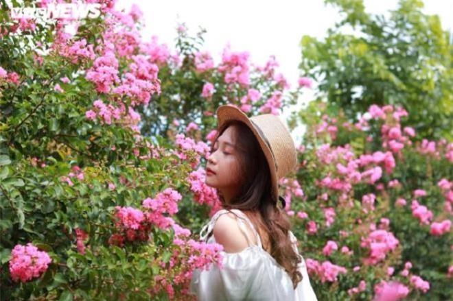 Ảnh: Con đường rực rỡ hoa tường vi như vườn cổ tích ở Hà Nội - 6