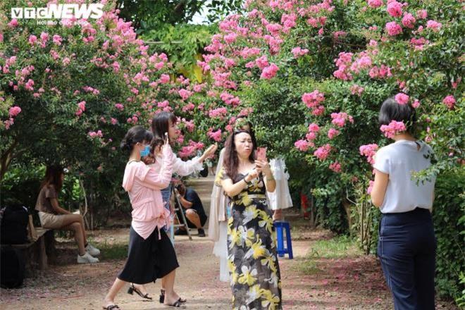 Ảnh: Con đường rực rỡ hoa tường vi như vườn cổ tích ở Hà Nội - 8