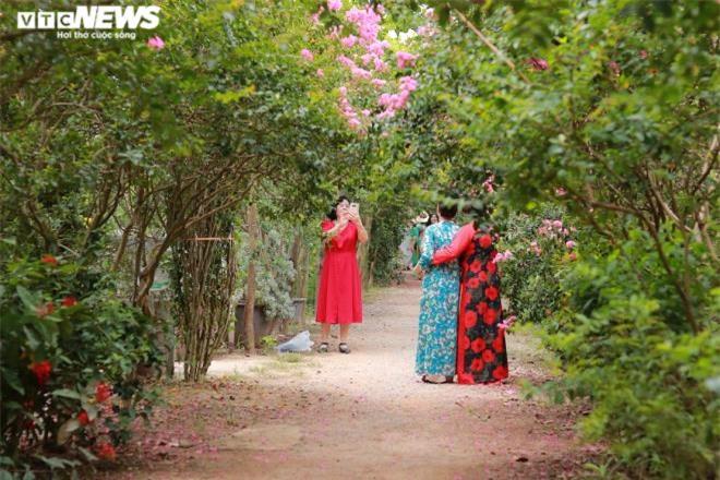 Ảnh: Con đường rực rỡ hoa tường vi như vườn cổ tích ở Hà Nội - 9