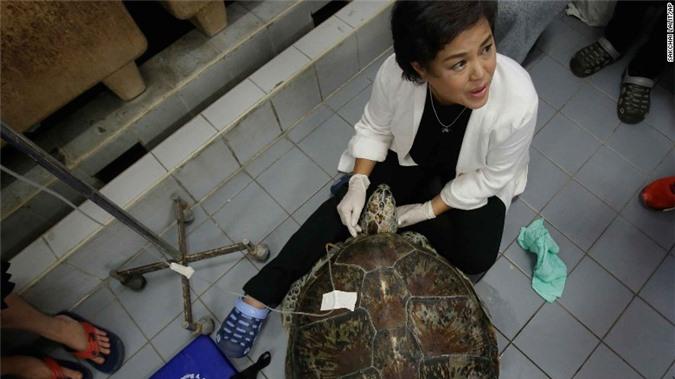 Con rùa không thể bơi dưới nước, các bác sĩ siêu âm và phát hiện sự thật đáng sợ, kết cục càng khiến mọi người không khỏi xót xa - Ảnh 6.