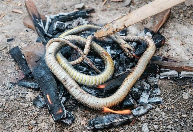 Phát hiện bằng chứng con người ăn thịt rắn cách đây 15.000 năm - 1