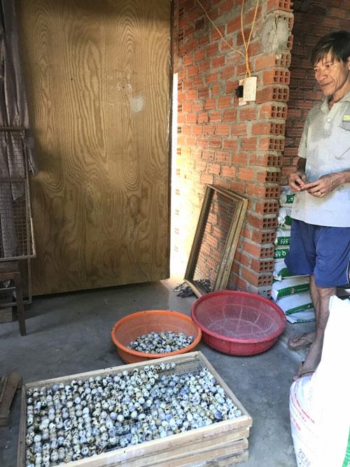 Anh Trần Ngọc Hiền chon trứng cho vào lò ấp để ấp ra trứng lộn bán được giá cao hơn. Ảnh: Vũ Đình Thung.