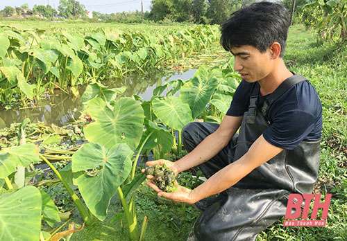 Mô hình nuôi trồng thủy sản mang lại giá trị kinh tế cao cho anh Nguyễn Văn Toàn.