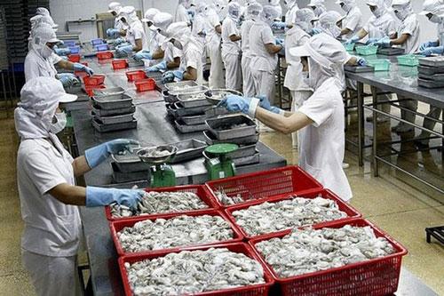 Xuất khẩu mực, bạch tuộc giảm ở nhiều thị trường (Ảnh Internet)