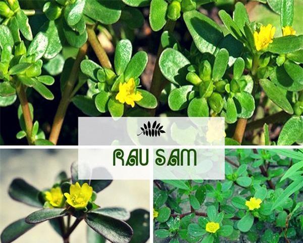 1 loại cây 2 số phận: Mọc hoang dại ở Việt Nam, sang nước ngoài thành 'thần dược' đắt giá - 3