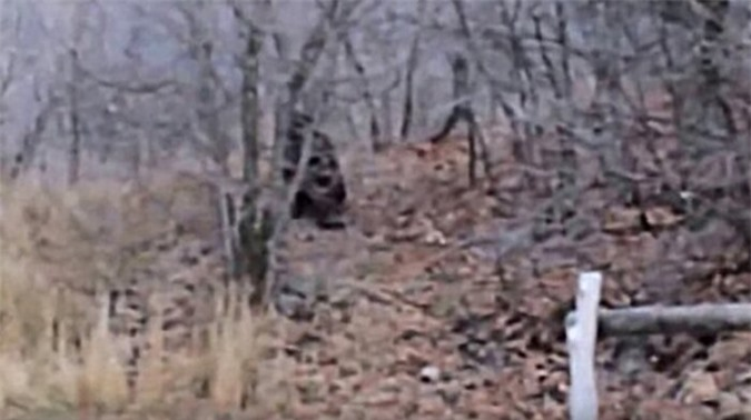Bigfoot Provo Canyon.