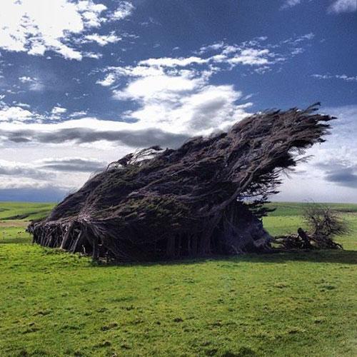 Cây nghiêng ngả đổ rạp vì gió thổi mạnh không ngừng nghỉ suốt ngày đêm ở New Zealand