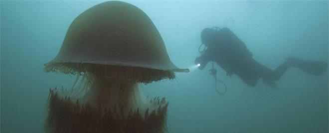 Bí ẩn của loài sứa khổng lồ với nọc độc chết người - 1