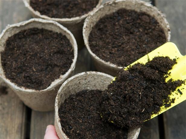 Cây lưỡi hổ: Loại cây lọc độc tố cực tốt, đuổi vận xui, hút tài lộc mà ai cũng muốn trồng - 5