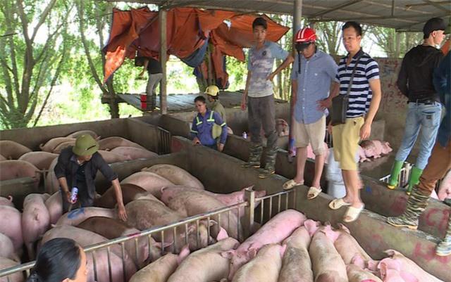 Giá lợn cần về ngưỡng 75.000 - 80.000 đồng/kg - Ảnh 1.