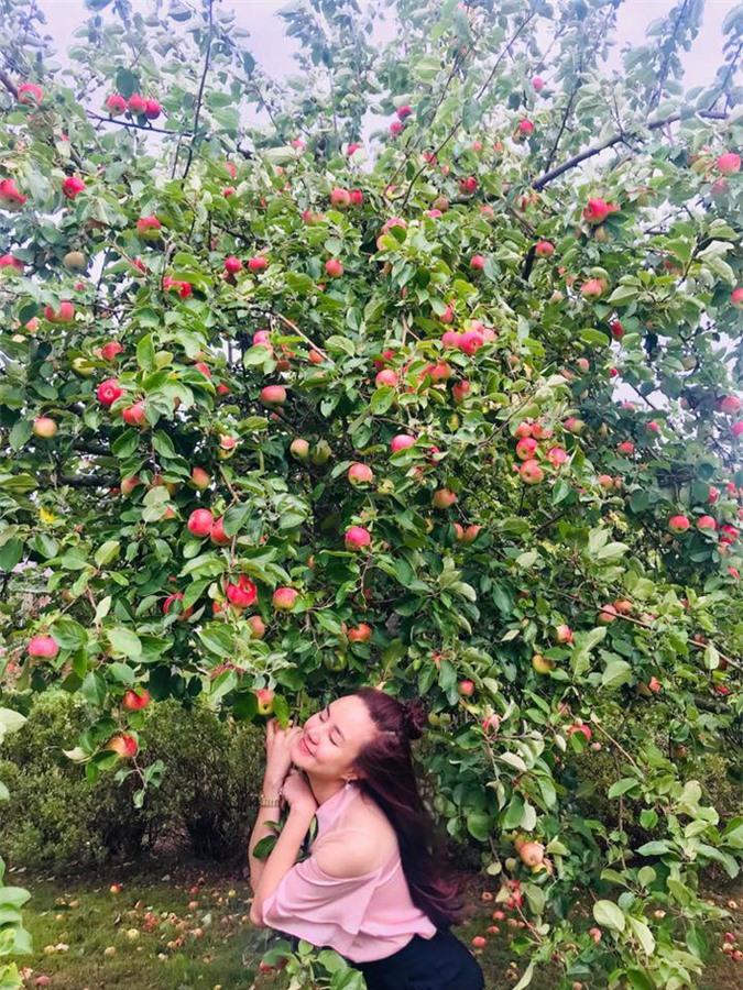 Cây lựu sai trái