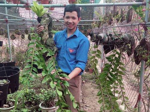 Hòa Bình: Chàng thanh niên làm giàu từ vườn hoa cây cảnh