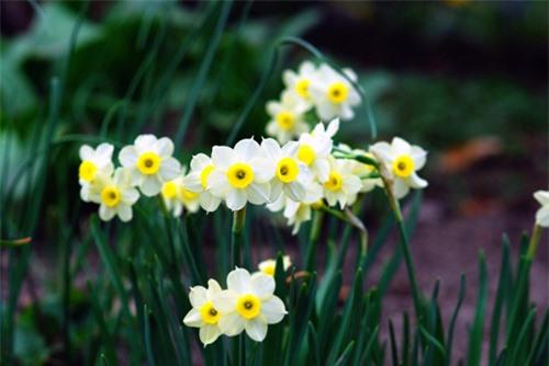 9 loại hoa đẹp nhưng cực độc, tuyệt đối không trồng trong nhà có trẻ nhỏ - 2