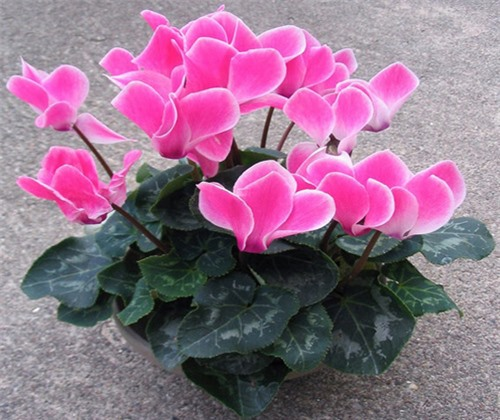 9 loại hoa đẹp nhưng cực độc, tuyệt đối không trồng trong nhà có trẻ nhỏ - 8