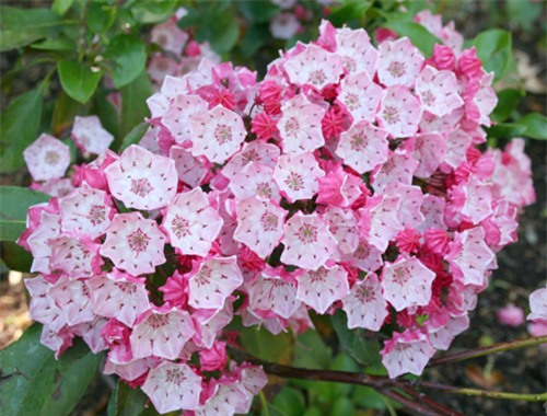 9 loại hoa đẹp nhưng cực độc, tuyệt đối không trồng trong nhà có trẻ nhỏ - 9