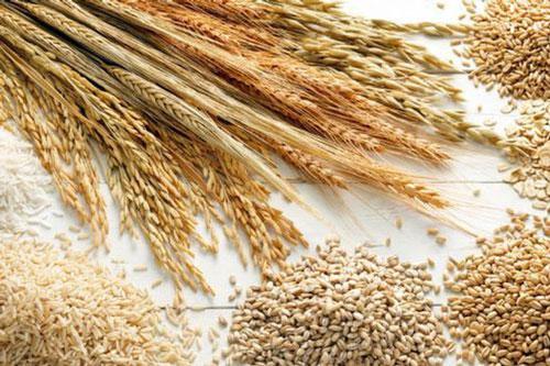 Giá lương thực, thực phẩm thế giới tăng lần đầu tiên trong năm nay