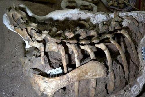 Khám phá hóa thạch khủng long chân chim được phát hiện ở Argentina