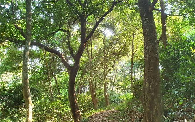 Một con đường mòn nằm ngay giữa đỉnh rừng